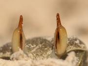 Auge in Auge Krabbe Praslin RH_L9806