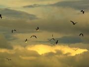 Ueber den Wolken Island RH_L4991