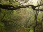 Nebelwald Madeira RH_L5162-