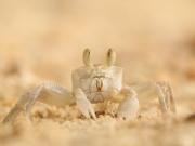 Krabbe Portrait Seychellen RH_L8983